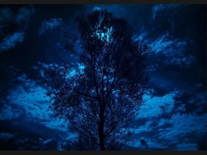 014-Moonlight-Tree-9039